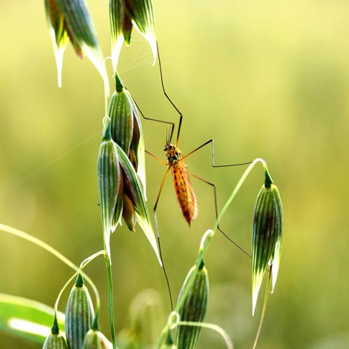 LOR_insecteWeb