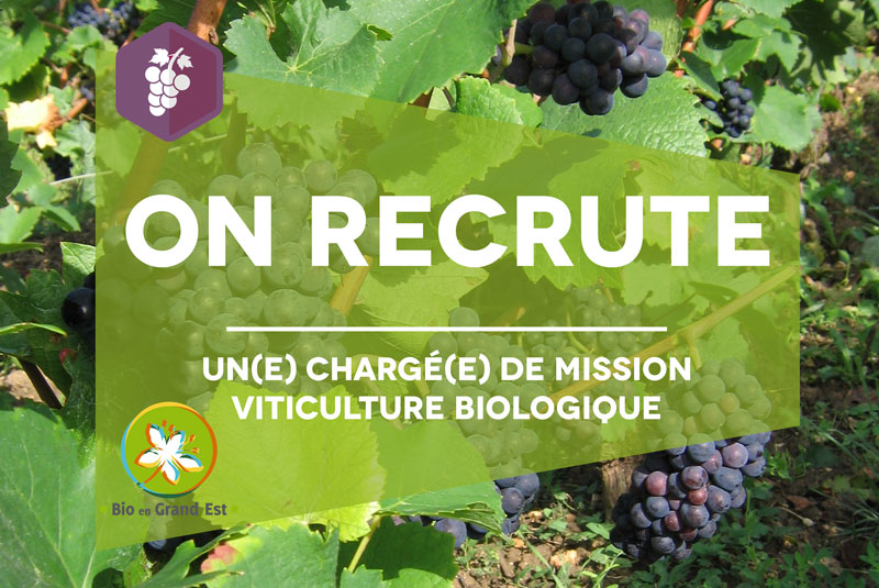 Recrutement : Chargé(e) de mission viticulture biologique