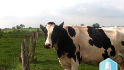 « Les produits laitiers, nos amis pour la vie » ? Oui, mais BIO !