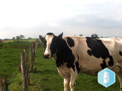 Conjoncture laitière bio au 1er semestre 2020