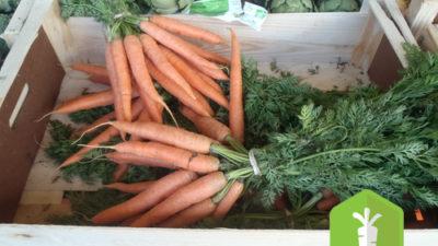 Filière légumes de plein champ bio : constitution d'une association de producteurs