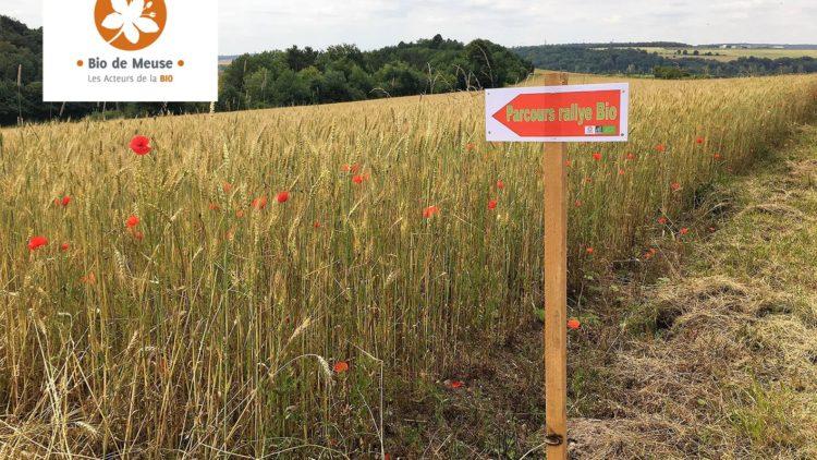 Le 18e Rallye Bio de Meuse en préparation
