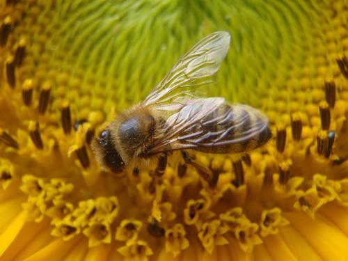 L'AB au service de la biodiversité