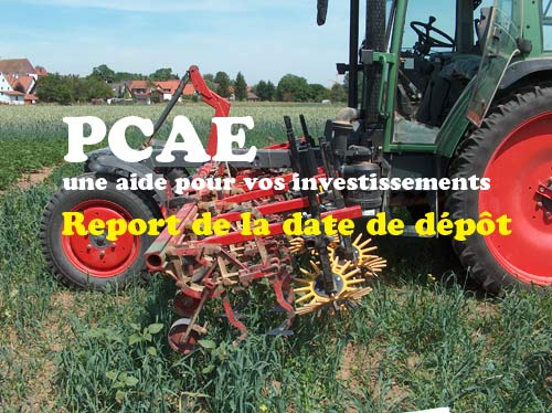 Prolongation des délais pour le dépôt des demandes PCAE 2020