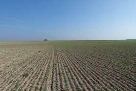 Formation : Utiliser les plantes bio-indicatrices pour connaître son sol, adapter ses pratiques et mieux gérer les adventices