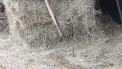 Faire face à la sécheresse en élevage bio : pistes d'adaptation et partenariats entre producteurs