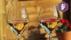 Structuration de la filière Champagne Bio