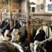 Changement dans la réglementation liée à l'attache des animaux