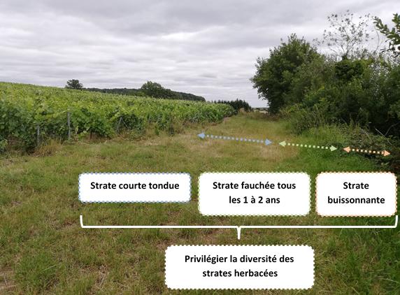Gestion des talus pour augmenter la Biodiversité locale