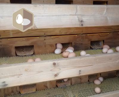 Formation : Créer son centre d'emballage d'œufs manuel à la ferme et acquérir les bases du paquet hygiène