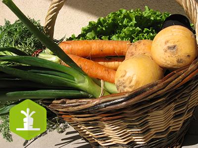 Formation : mes légumes sont-ils vendus au bon prix ?