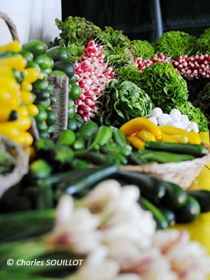 Formation : planifier ses cultures en maraichage bio et développer sa production de légumes primeurs