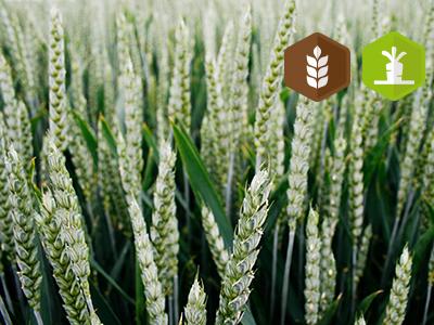 [reportée] Formation – Initiation à la bioélectronique et à la fabrication de solutions aqueuses et dilutions de plantes