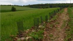 La reconquête de la biodiversité : le grand chantier 2021 des agriculteurs bio du Grand Est
