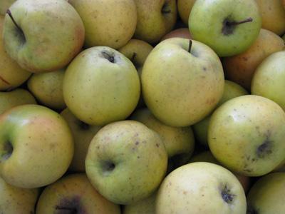 Formation : Arboriculture fruitière en maraichage bio