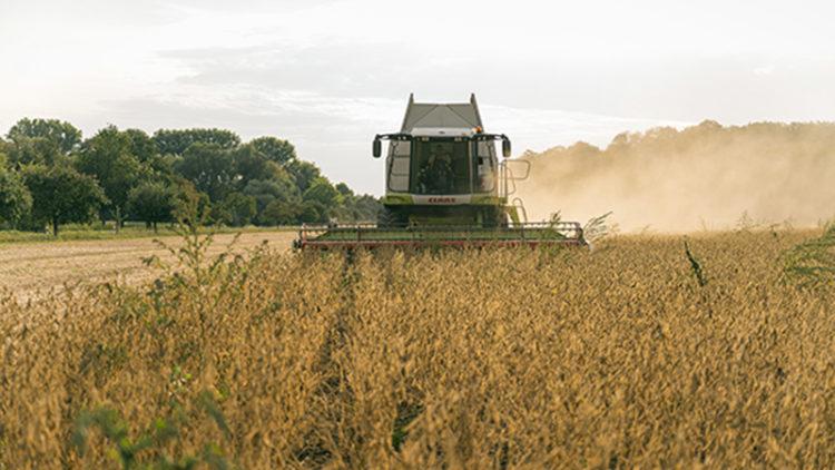 Taifun – Tofu GmbH – Recherche des producteurs de soja bio pour 2021