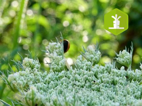 Formation : Biodiversité et maraichage bio, comment favoriser la présence d'auxiliaires dans mes parcelles ?