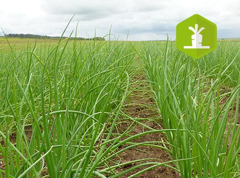 Formation : Développer la production des légumes de plein champ bio