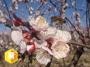 Nouvelle réglementation AB en apiculture: où en est-on?