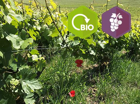 Découverte de la viticulture biologique à Loisy-en-Brie