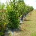 Favoriser la biodiversité sur sa ferme : quelles pratiques adoptées ?