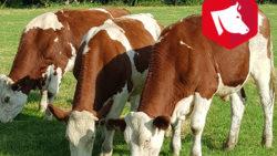 Le Bœuf à l'Herbe : une production qui prend tout son sens en bio