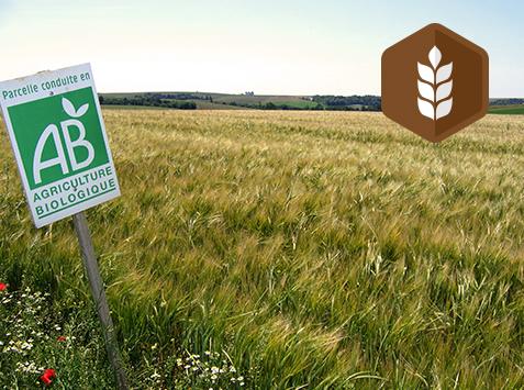 Découverte des Grandes Cultures en Agriculture Biologique