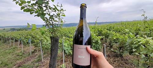 L'essor de la viticulture Bio dans l'Aisne, témoin de l'intérêt de la filière Champagne Biologique