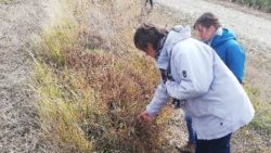 Retour d'expériences sur la biodiversité sur un domaine
