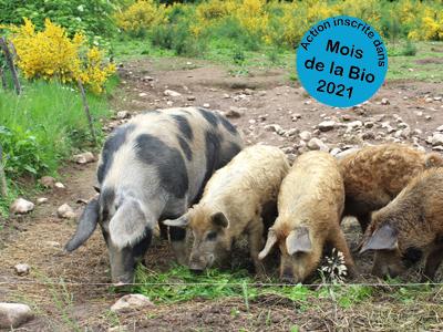 Mois de la Bio : Transmettre sa ferme bio et s'installer hors cadre familial en élevage de porcs