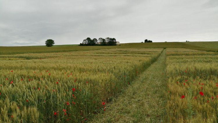 Rencontre avec Vincent GAUVAIN, agriculteur en grandes cultures bio à Beine-Nauroy (51)